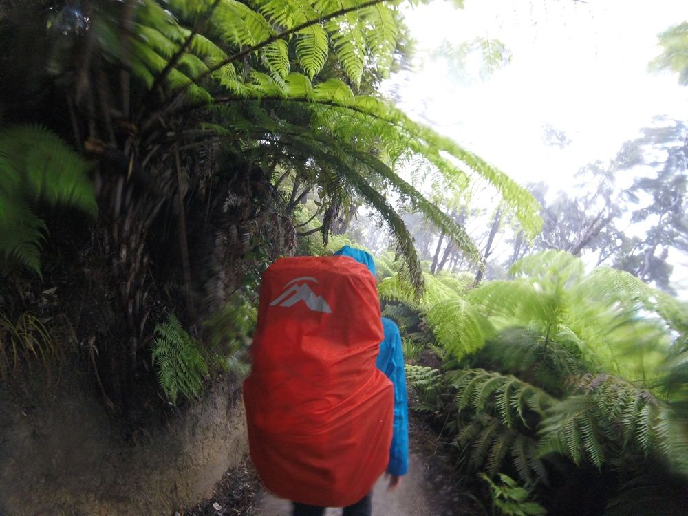 tasman-danka-busz-deszcz